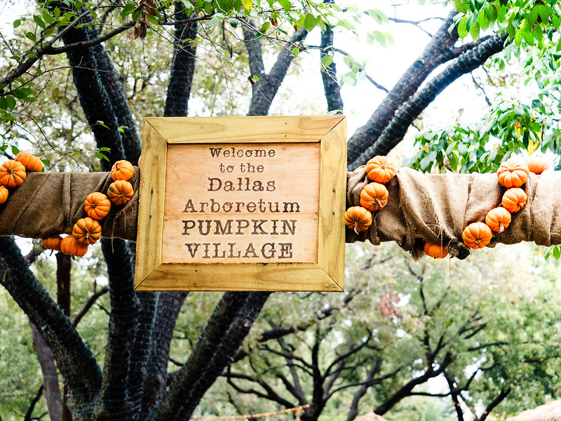 cute & little blog | pumpkin patch