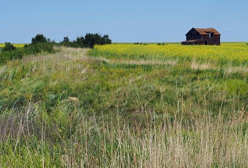 house canada field grass entropy sunny olympus clear prairie saskatchewan canola omd em5