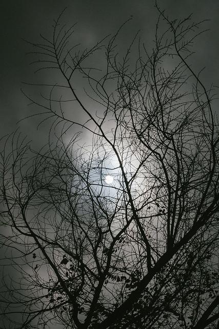 344 - Grey Days