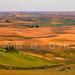 Palouse by Ryan McGinty