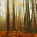 Woodland Mist by whidom88
