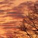 Winter Dawn by Malcolm Bull