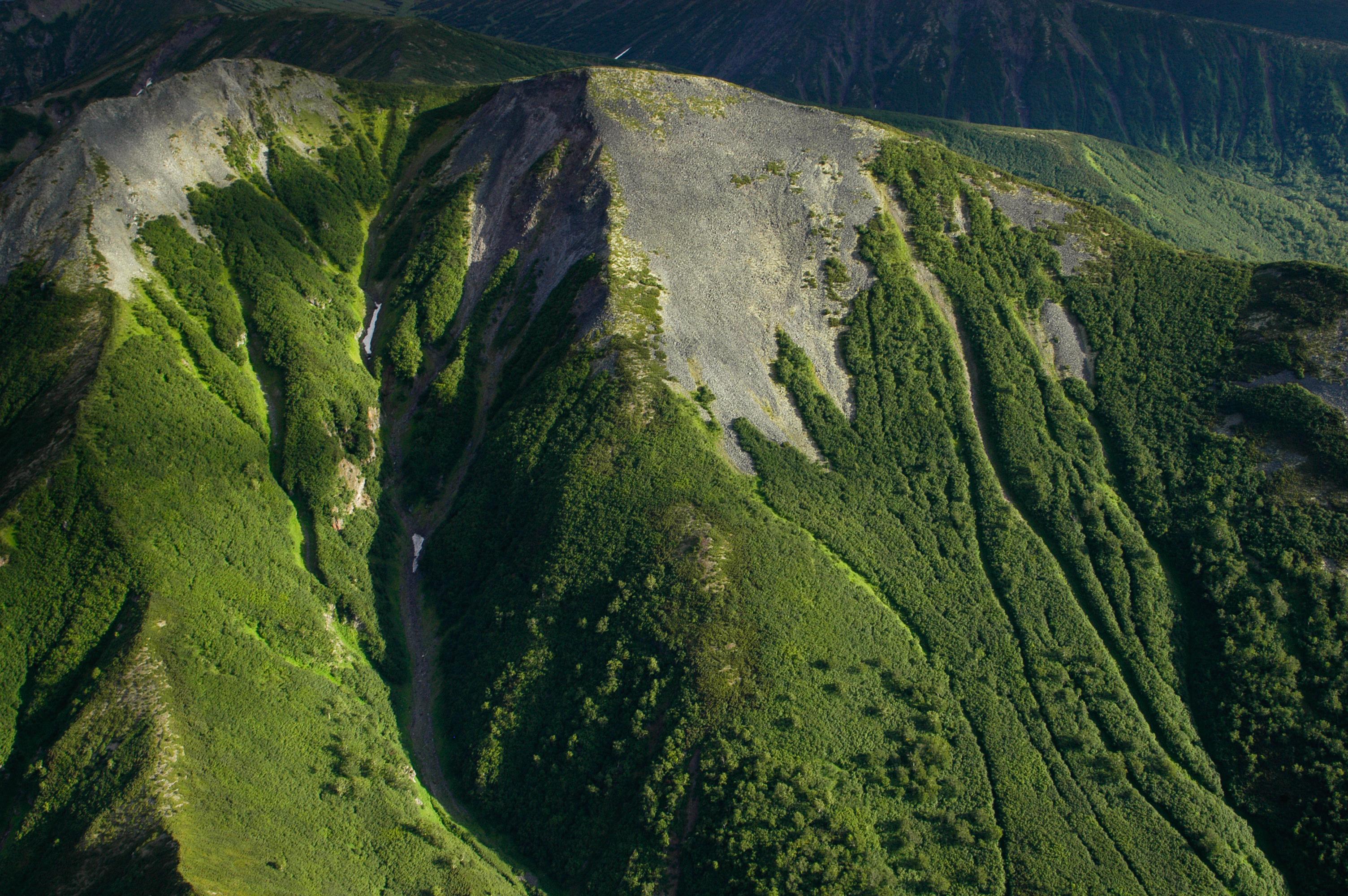 природа камчатки фото лес минус заключался