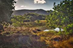 Mangrove Swamp in Antigua.
