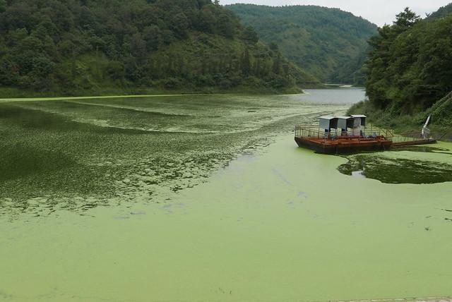 沒底坑水庫覆蓋了一層綠膜。攝影:晁瑞光。