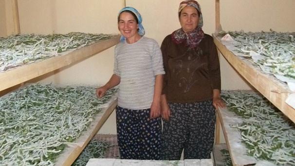 Böcek yetiştirerek 5 bin lira kazandılar (2)