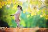 Ballerina? by 波希米亚