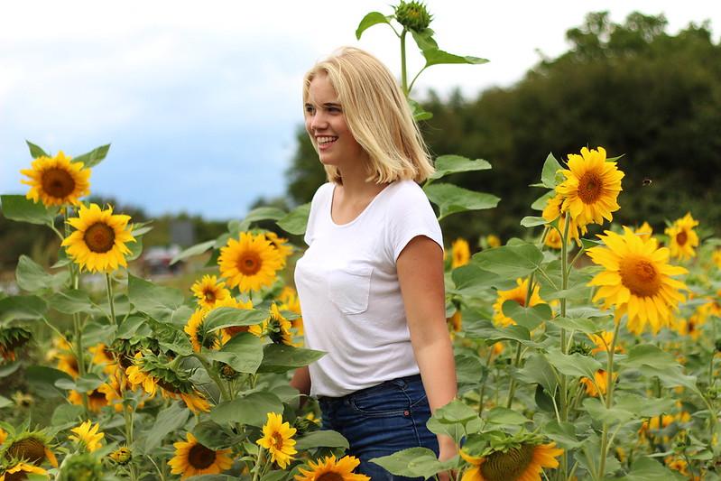 Sonneblumenfeld Alisha September 2015 061gimp