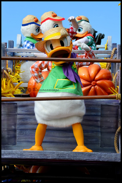 Famille Duck