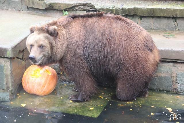 Besuch Zoo Rostock 17.10.201543