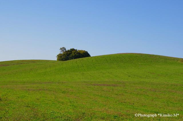 牧草畑の丘