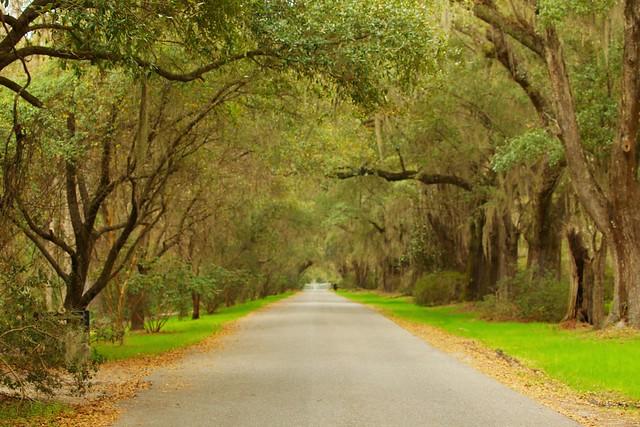 Charleston Tanvii.com 5