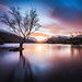 Llyn Padarn tree by Neil Nicklin Photography