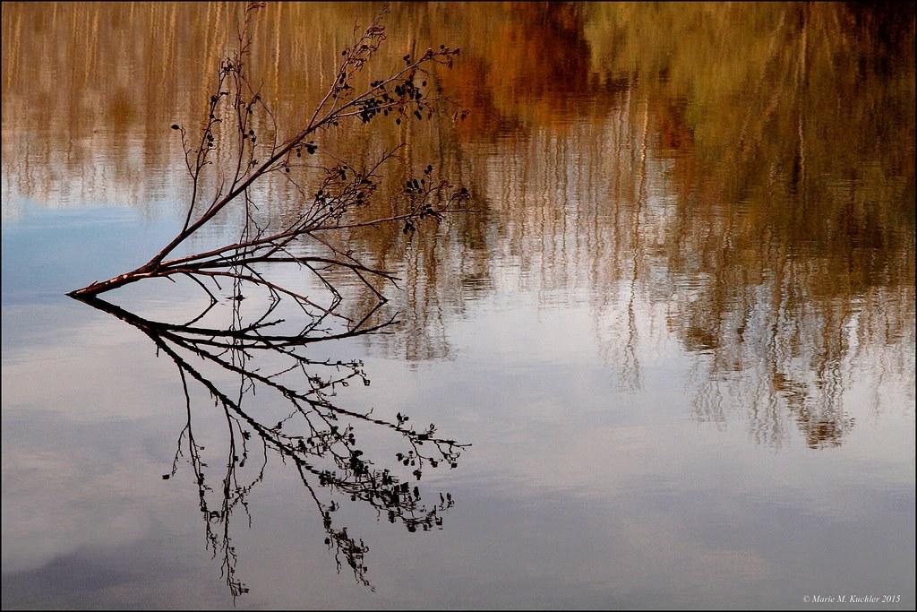 La branche dans son miroir d'automne  23327473775_df25375480_b