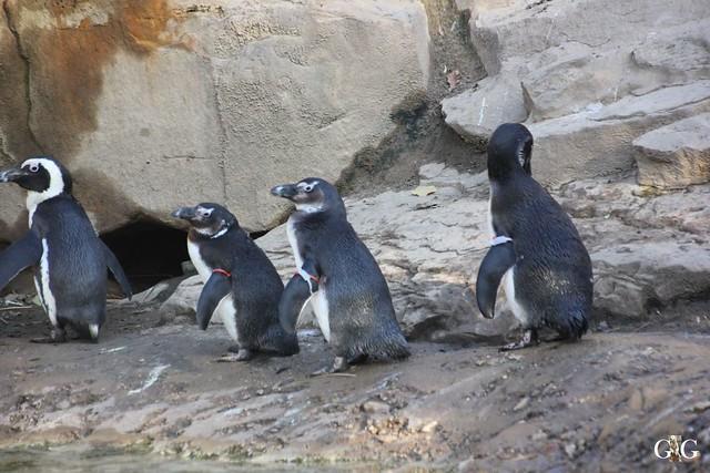 Besuch im Berliner Zoo 06.12.201539