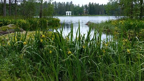 flowers iris summer plants lake plant flower building finland geotagged july belfry fin irispseudacorus iridaceae isokyrö 2015 pohjanmaa eteläpohjanmaa kurjenmiekka 201507 orisberg 20150708 kotilammi storkyrö geo:lat=6288667162 geo:lon=2239369868