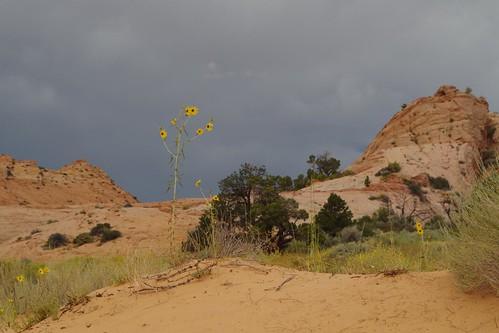 orage dans le désert