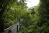 J03 - Balade au jardin Botanique tropical de Onomea Bay, Big Island