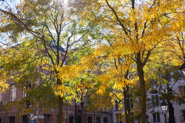 Antwerp Stadswaag