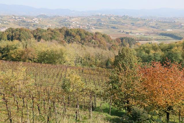 Goriška Brda (Edi Keber Winery)
