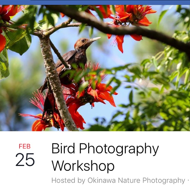 Bird photography Workshop -Okinawa, Japan