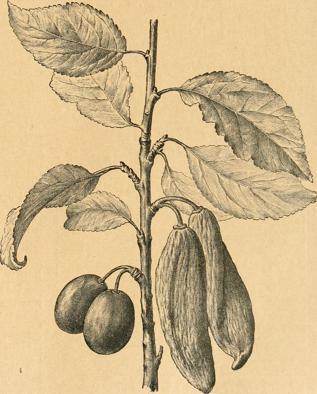 "Image from page 114 of ""Die Gartenwelt"" (1897)"