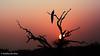 Sunrise at Yala National Park