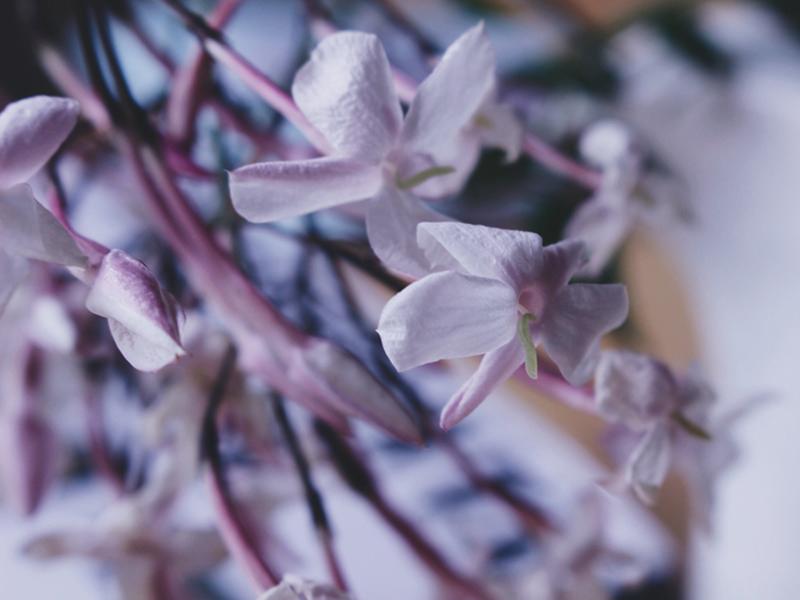 A Little Life, Bramble and Thorn, Hanya Yanagihara, Book, Review