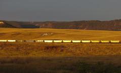Train in the sunrise