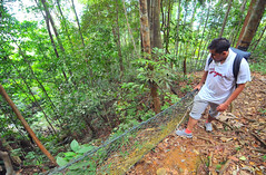 Bintan rain forest