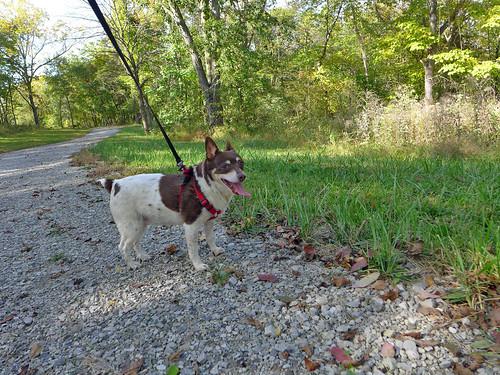 2015-10-10 - Walking a New Trail - 0046 [flickr]