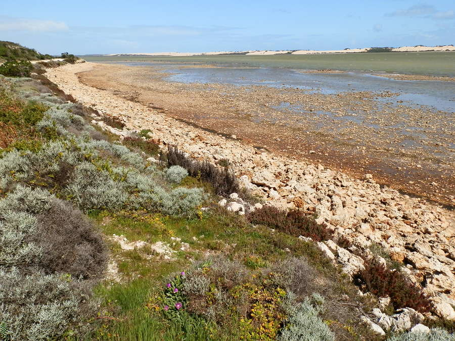 Coorong Waterways and Dunes, Salt Creek Loop Track, South Australia
