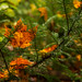 Orange Leaf on Green by James.Baron