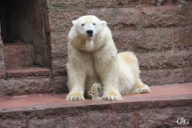 Besuch Zoo Rostock 17.10.201589