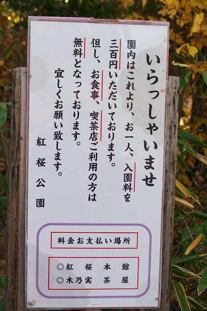 2015紅葉 紅桜公園_10