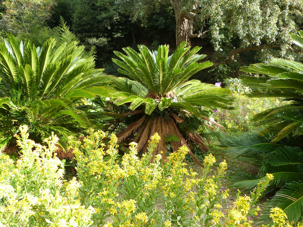 Domaine du rayol le jardin des m diterran es 39 s most - Domaine du rayol le jardin des mediterranees ...