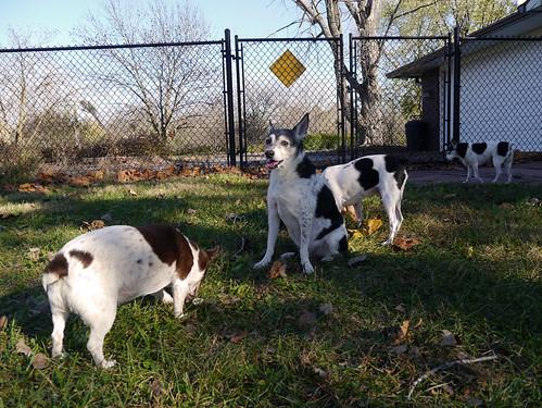 2015-11-01 - Dogs & Sun - 0017 [flickr]