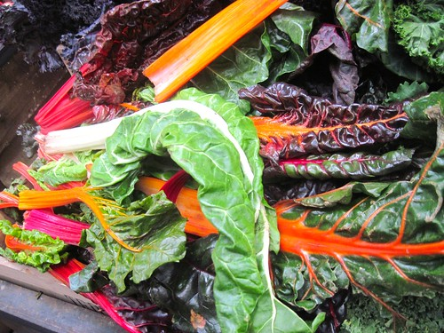 Rainbow Chard at Borough Market