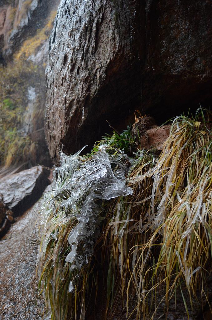 frozen vegetation