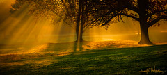 golden sun beams