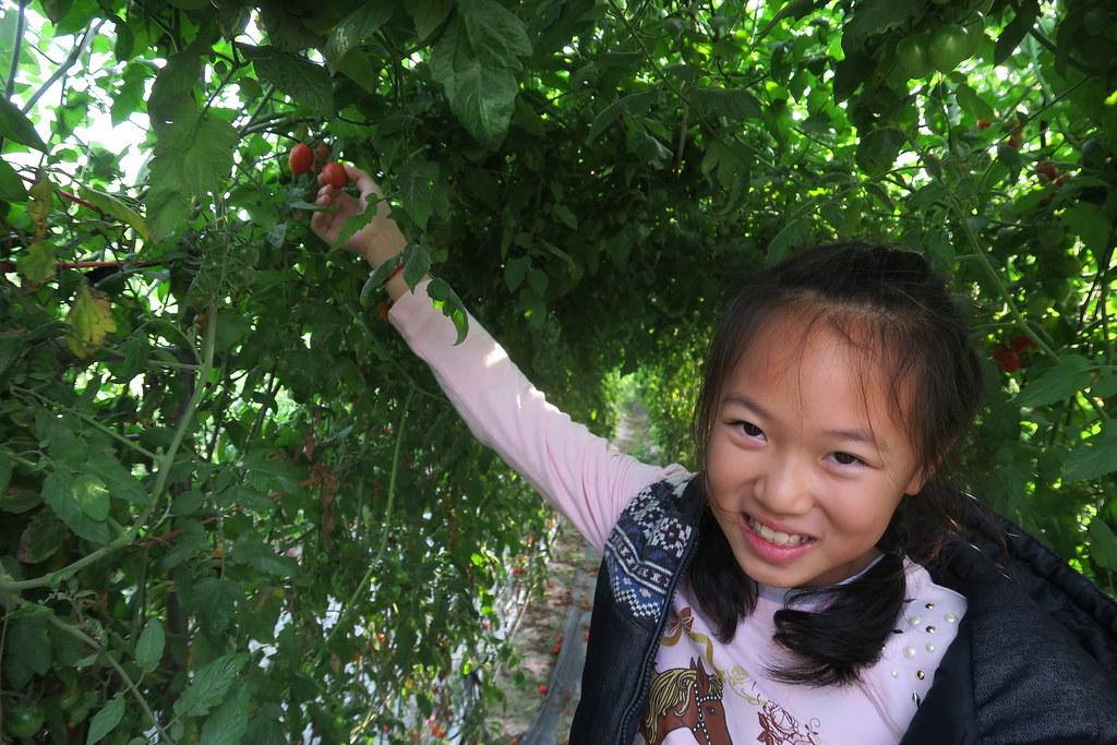 阿蓮三本草莓園 (14)