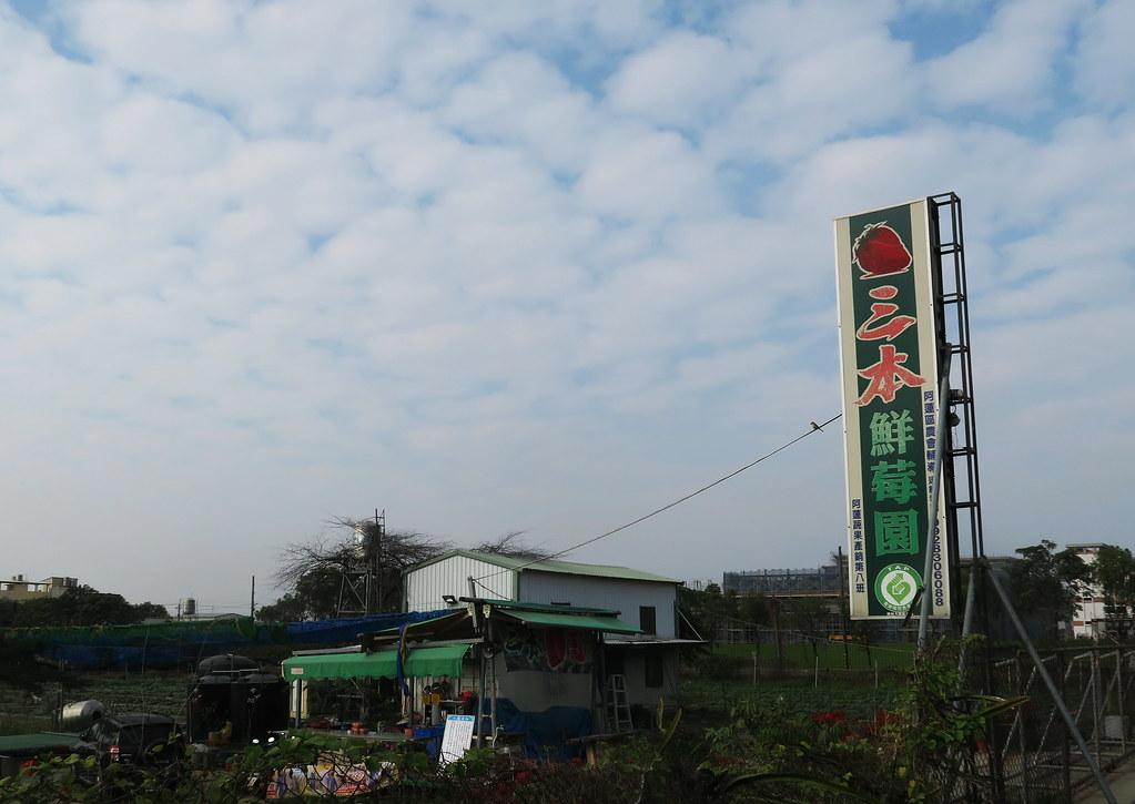 阿蓮三本草莓園 (1)