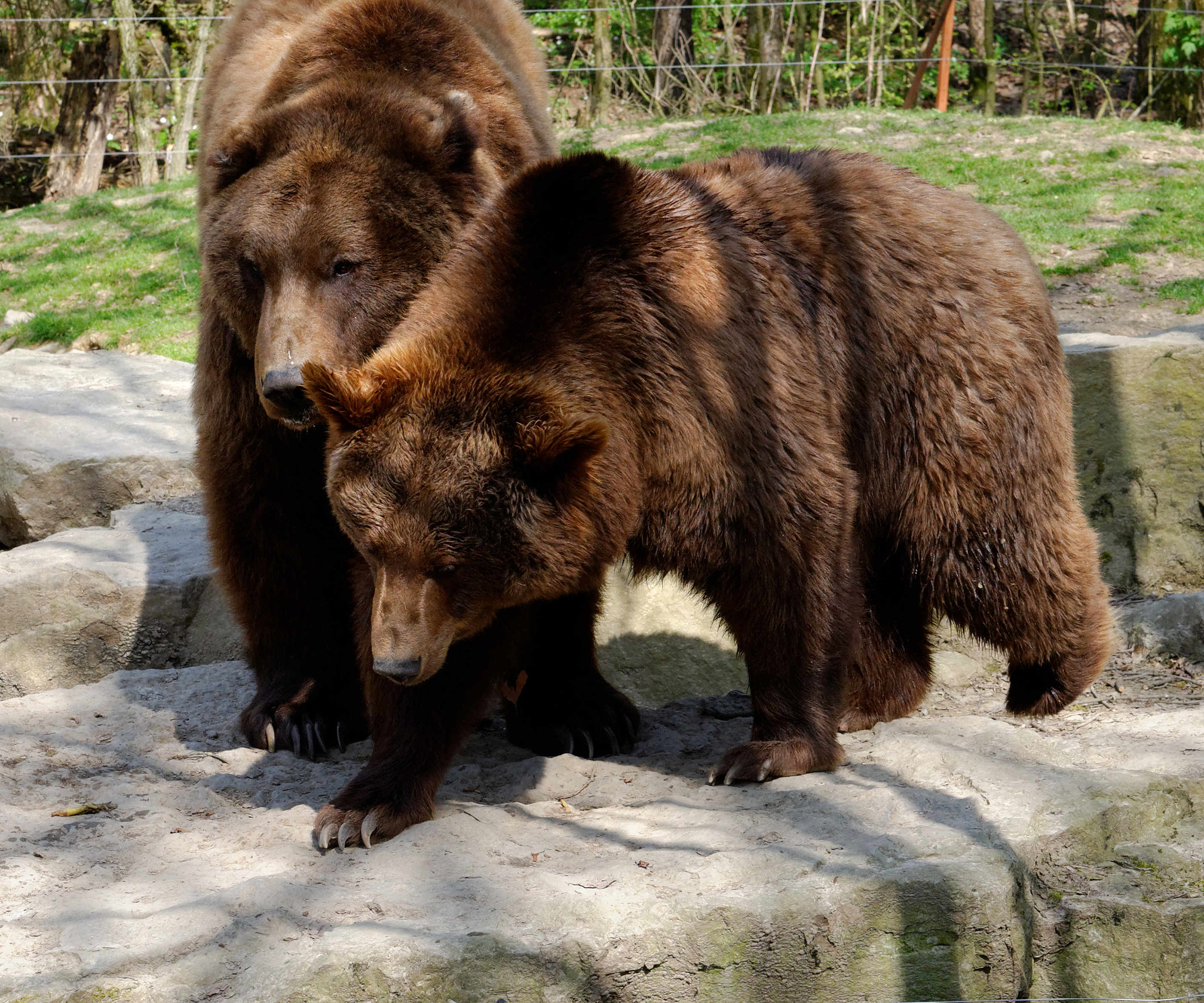 Schmusebären