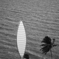 50/365 le palmier et la lanterne - 20-02-2017