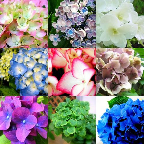 Wedding Flowers Available In October In Australia : Terrilyn s hydrangeas are versatile fall wedding