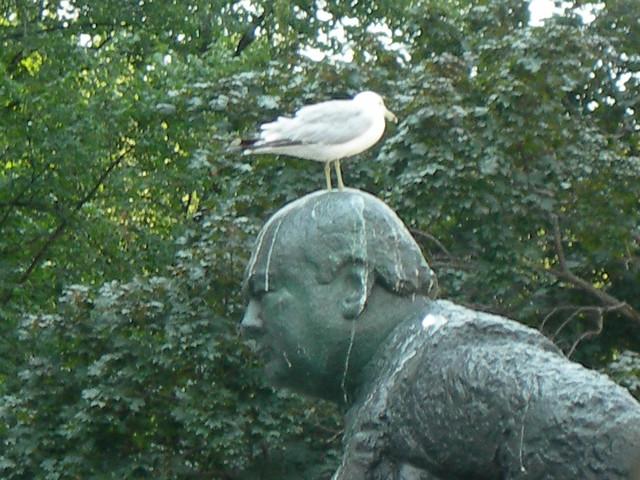 Too Many Seagulls !