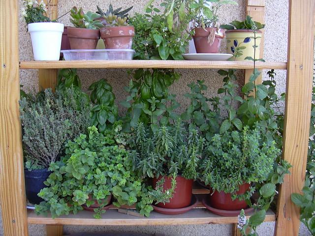 Cultivo recolecci n y conservaci n de hierbas arom ticas for Cultivo de plantas aromaticas y especias