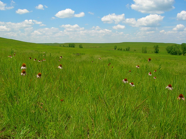 Tall Grass Prairie National Preserve Kansas Usa