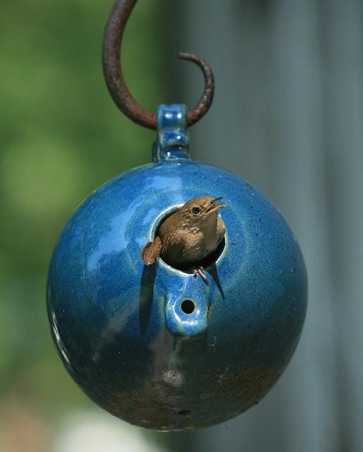 Bottle Bird #2 (House Wren)