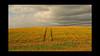 Barley fields by feefers3